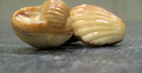 Patisserie Blanckaert - 's Herenelderen (Tongeren) - Pralines